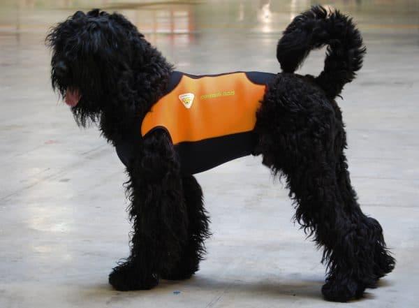cressi-dog-wetsuit