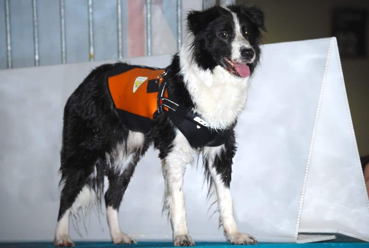 Dog Wetsuit Muta In Neoprene Per Cani Taglia Media Cressi Dog