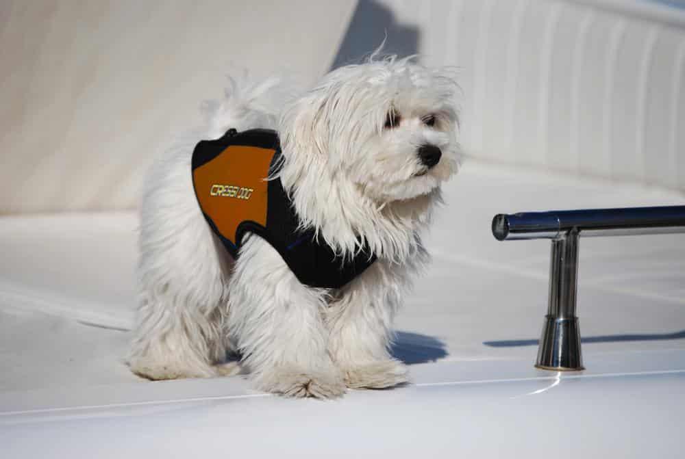 Dog Wetsuit Muta In Neoprene Per Cani Taglia Piccola Cressi Dog