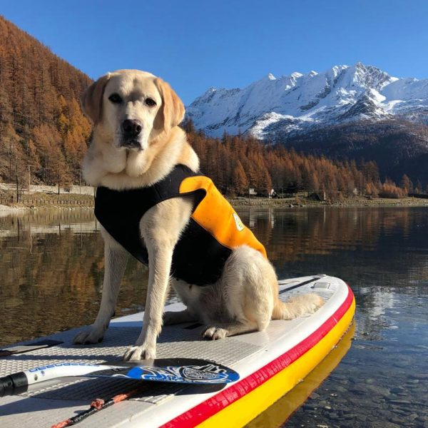 grande-cressi-dog-wetsuit