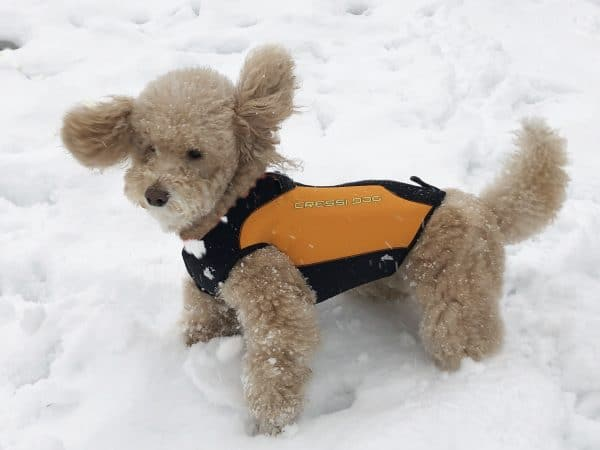 cressi-dog-wetsuit-muta-neoprene-cani-neve-snow