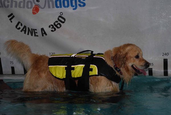 cressi-dog-golden-retriver-giubbotto-salvagente-per-cani-dog-life-jacket