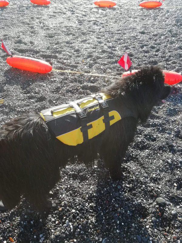 cressi-dog-life-jacket-salvagente-per-cani-salvataggio
