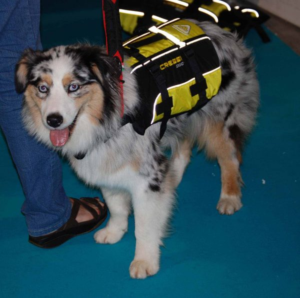 cressi-dog-salvagente-per-cani-dog-life-jacket-australian-shepherd1