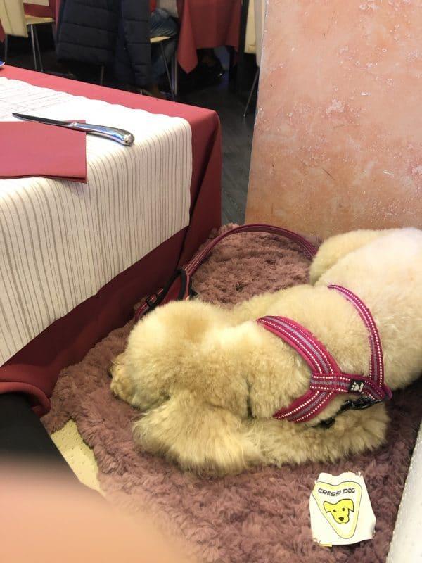 coperta tappeto per cani gatti eco pelliccia sintetica