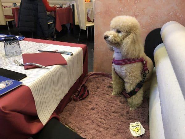 coperta tappeto per cani gatti eco pelliccia sintetica filati Mondial